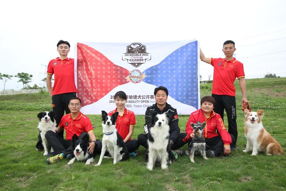 官宣!冠能再次助力中国军团出征世界敏捷犬公开赛